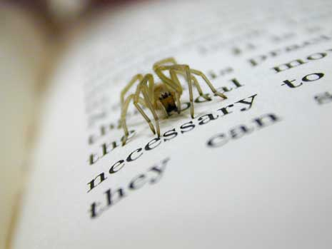 Spider on a book stopped at the work 'necessary'