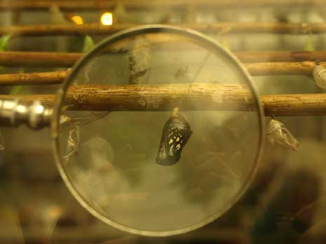 A cocoon seen through a magnifying glass