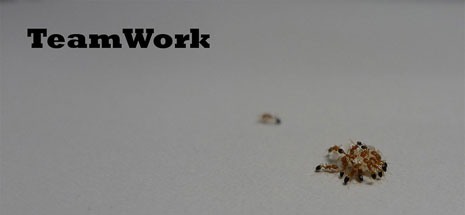 A group of ants displaying teamwork