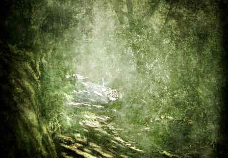 Background image of a path through the forest