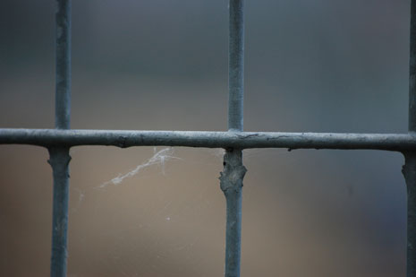 Closeup of an iron fence with cobweb